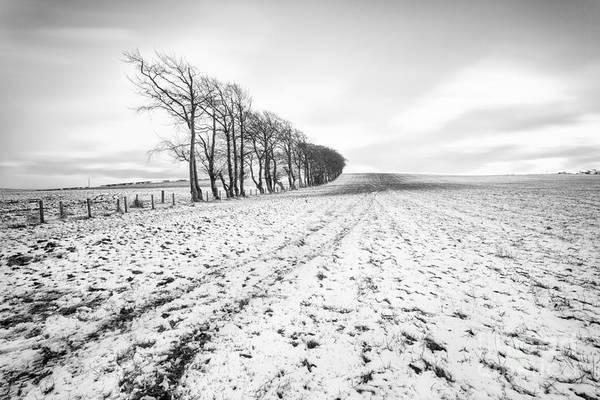 Wall Art - Photograph - Trees In Snow Scotland V by John Farnan