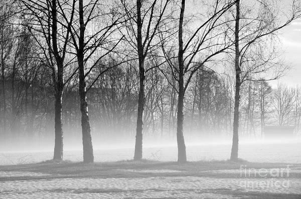 Photograph - Trees In Steam Fog by Randi Grace Nilsberg