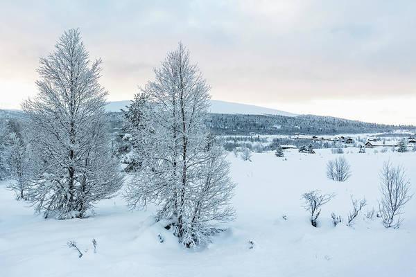 Lillehammer Photograph - Trees In The by Betsie Van Der Meer