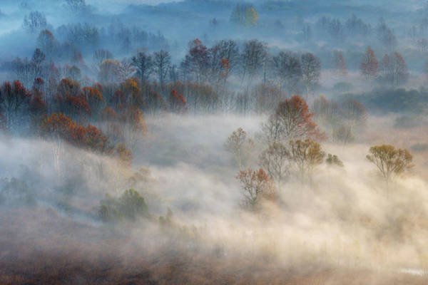 Distance Photograph - Trees In The Early Morning Fog by Valentino Alessandro