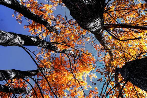 Photograph - Trees In The Fall by David Matthews