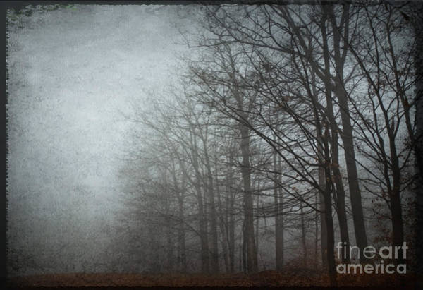 Photograph - Trees In The Fog by Debra Fedchin