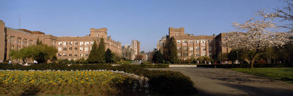 University Of Washington Wall Art - Photograph - Trees In The Lawn Of A University by Panoramic Images