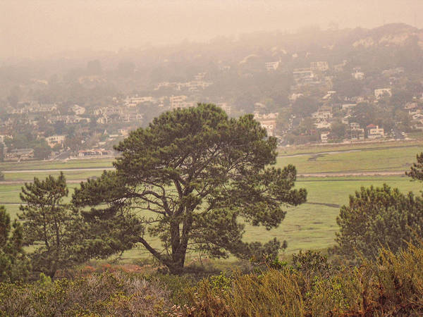 Photograph - Trees In The Mist 2 by Jeremy McKay