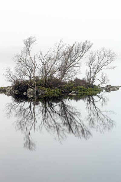 Photograph - Trees In The Mist by Grant Glendinning
