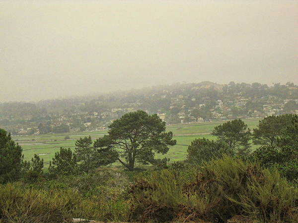 Photograph - Trees In The Mist by Jeremy McKay