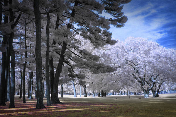 Photograph - Trees In The Park by Randall Nyhof