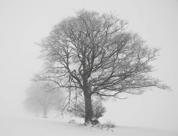Photograph - Trees In White Out. by Pete Hemington