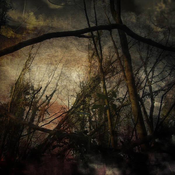 Wall Art - Digital Art - Trees No. 5 by Andy Walsh