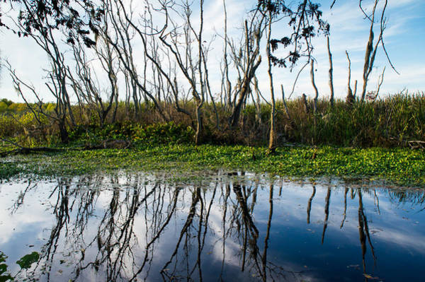 Wall Art - Photograph - Trees Of Alligator Swamp by Ellie Teramoto