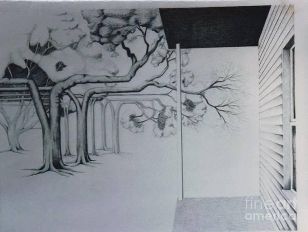 Drawing - Trees Of Beams by David Neace