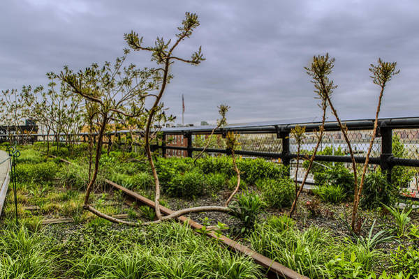 Photograph - Trees Of The High Line by Dave Hahn