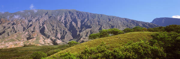 Haleakala Crater Photograph - Trees On A Hill Near Haleakala Crater by Panoramic Images