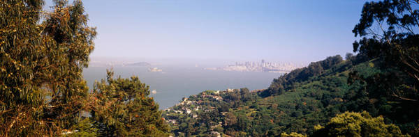 Marin Photograph - Trees On A Hill, Sausalito, San by Panoramic Images