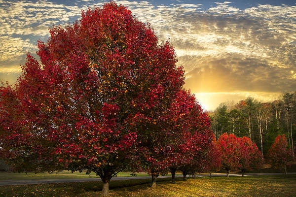 Nc Wall Art - Photograph - Trees On Fire by Debra and Dave Vanderlaan