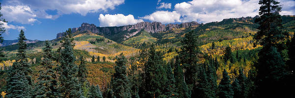 Ridgway Photograph - Trees On Mountains, Ridgway, Colorado by Panoramic Images