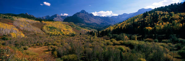Ridgway Photograph - Trees On Mountains, State Highway 62 by Panoramic Images