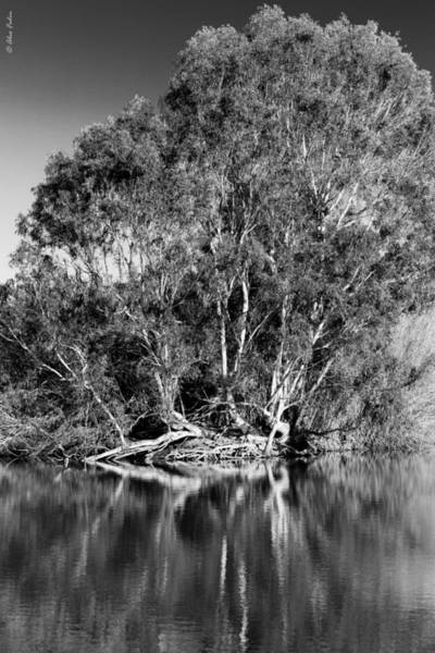 Photograph - Trees On The Lake Beach by Alexander Fedin