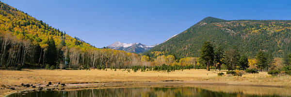 Flagstaff Photograph - Trees On The Mountainside, Kachina by Panoramic Images