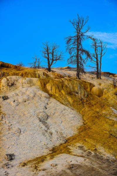 Photograph - Trees On Top by Harry Spitz