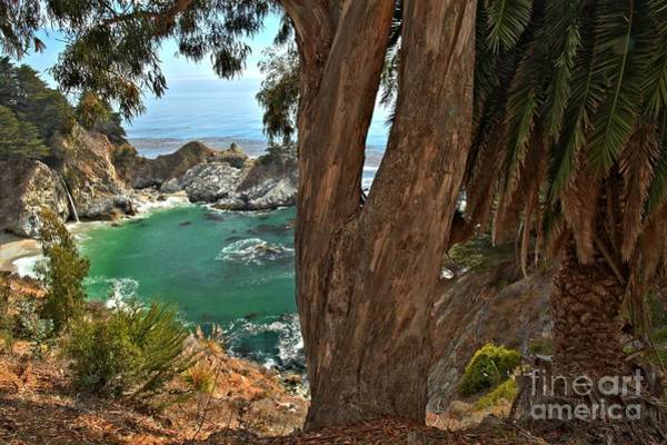 Photograph - Trees Over Mcway Falls by Adam Jewell