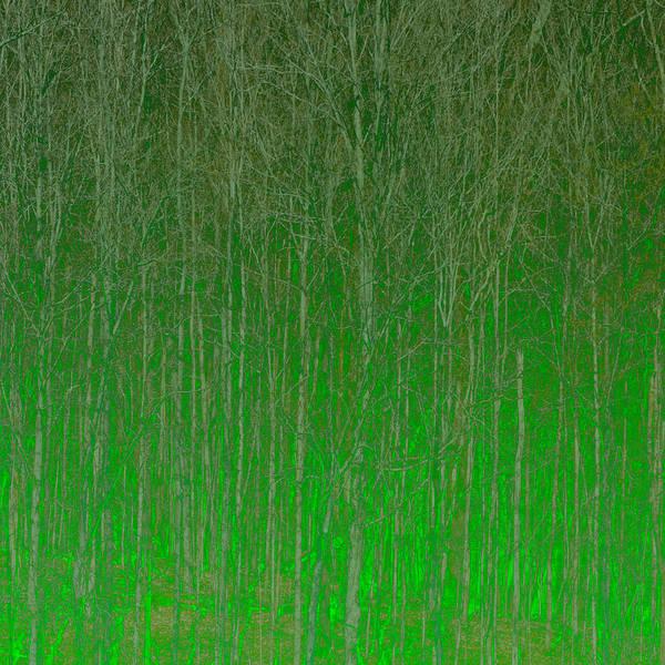 Digital Art - Trees by Peter Tellone