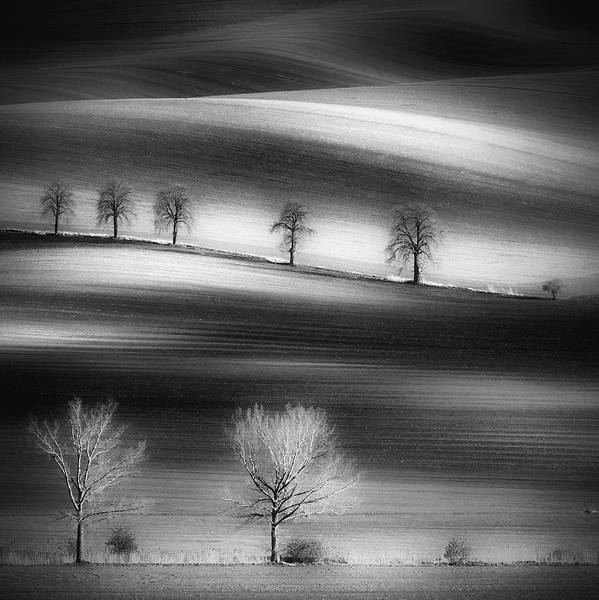 Wall Art - Photograph - Trees by Piotr Krol (bax)