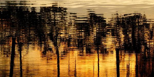 Photograph - Trees Reflected by Patricia Strand