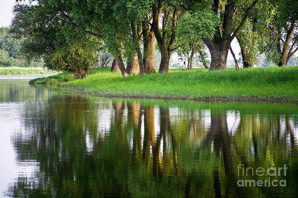 Photograph - Trees Reflection On The Lake by Heiko Koehrer-Wagner