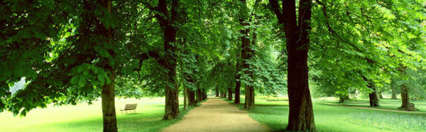 Respite Photograph - Trees Salzburg Austria by Panoramic Images