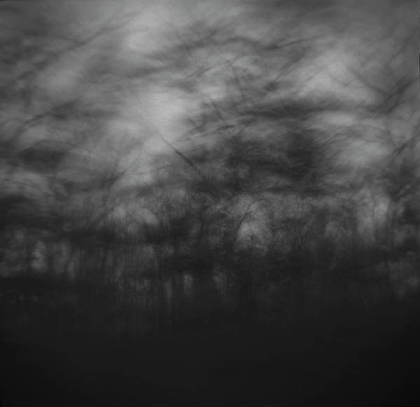 Wall Art - Photograph - Trees Sway In The Wind, Marthas by Tonee Harbert