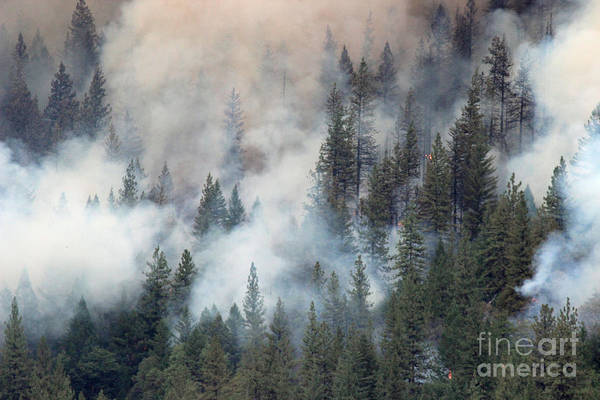 Beaver Fire Trees Swimming In Smoke Art Print