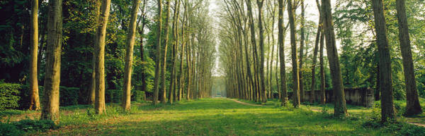 Thicket Photograph - Trees Versailles France by Panoramic Images