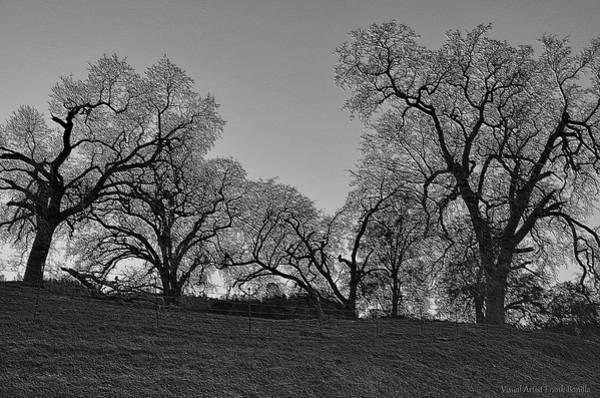 Digital Art - Trees by Visual Artist Frank Bonilla