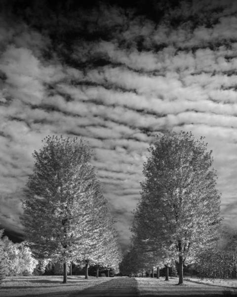 Photograph - Trees With Cirus Clouds by Randall Nyhof