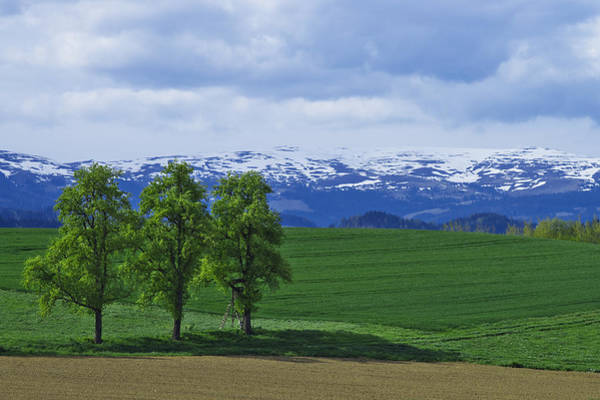 Photograph - Trees With Mountains by Ivan Slosar