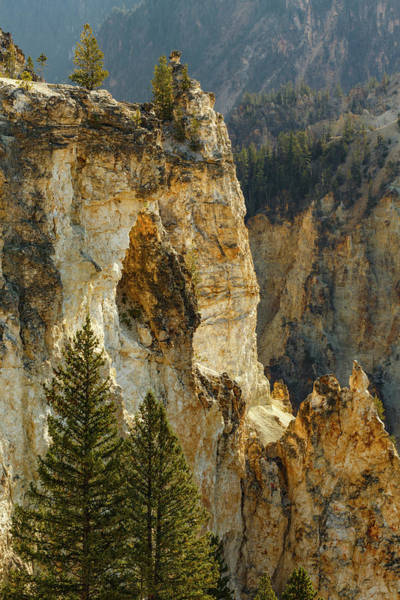 Yellowstone Canyon Photograph - Trees Within Grand Canyon by Adam Jones