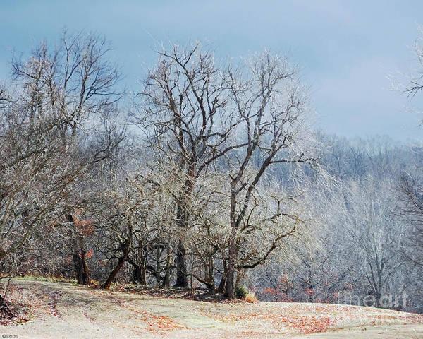 Photograph - Treescape Village Creek Ar by Lizi Beard-Ward