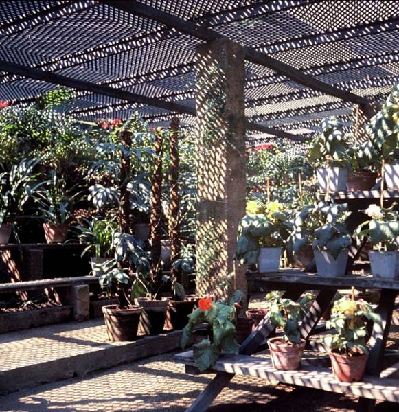 Iberian Peninsula Photograph - Trellis In A Greenhouse by Horst P. Horst