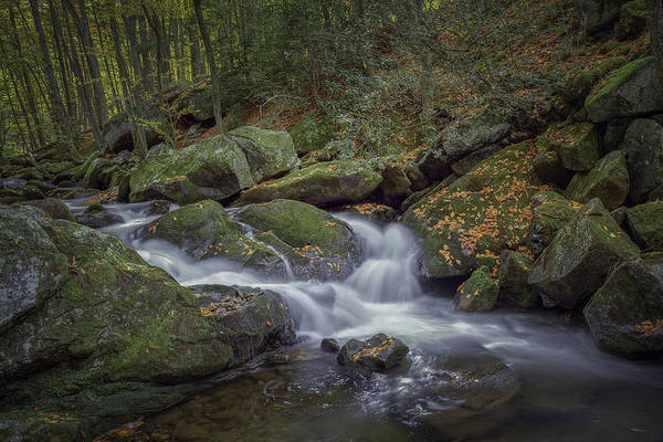 Photograph - Tremont Flow by David Waldrop