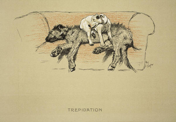 Hound Drawing - Trepidation, 1930, 1st Edition by Cecil Charles Windsor Aldin
