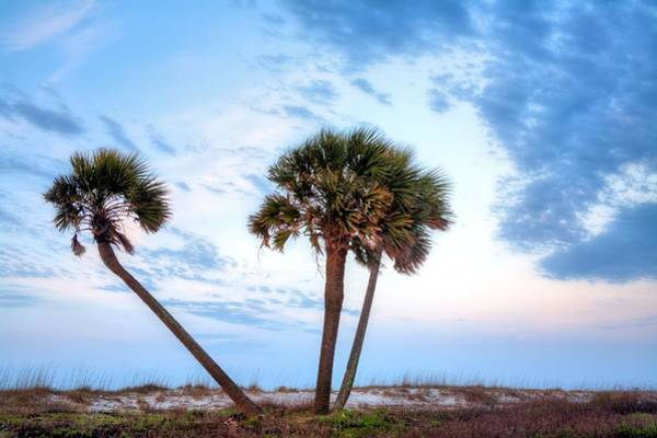 Photograph - Tres Amigos In Gulf Shores by JC Findley