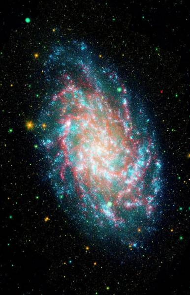 Pinwheel Photograph - Triangulum Galaxy (m33) by Jpl-caltech/nasa/science Photo Library