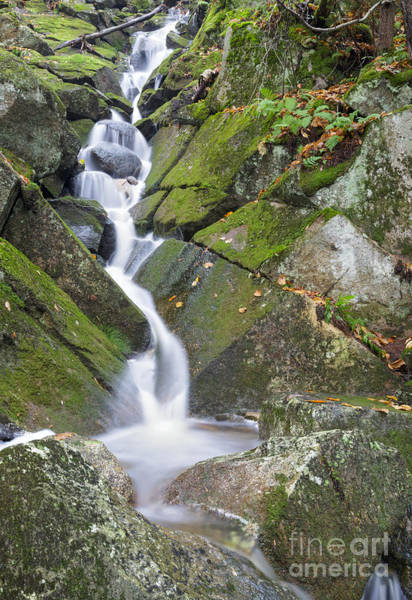 Photograph - Porcupine Brook - Kinsman Notch New Hampshire by Erin Paul Donovan