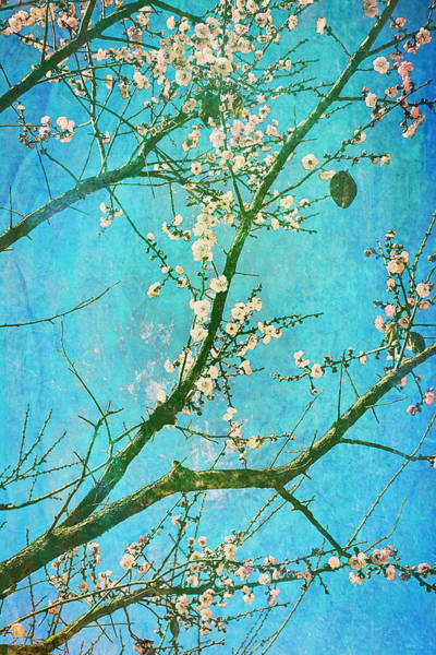 Photograph - Tribute To Van Gogh's Almond Blossoms by Arkamitra Roy