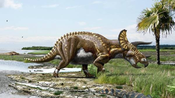 American Crocodile Photograph - Triceratops Horridus Dinosaur by Julius T Csotonyi/science Photo Library