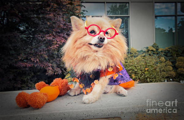 Dog Treat Photograph - Trick Or Treat by Charline Xia