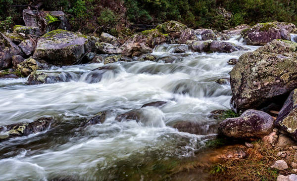 - Trickle To A Torrent by Mark Lucey