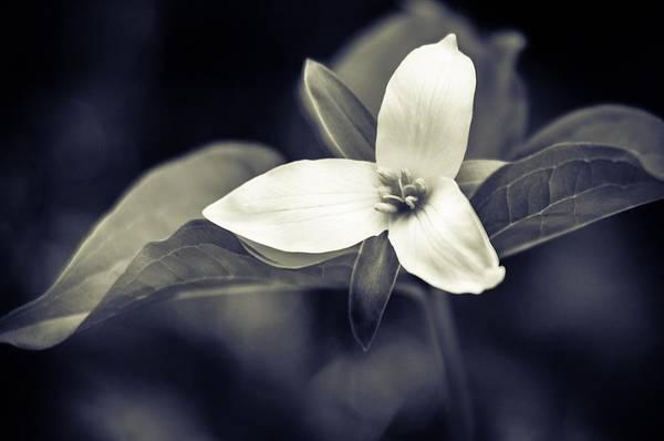 Photograph - Trillium by Brian Bonham