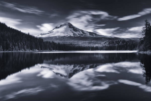 Photograph - Trillium Escape Monochrome by Darren  White